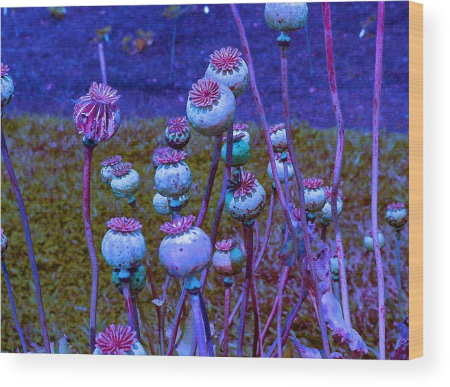 Poppies Wood Print featuring the photograph Blue Poppies by Mafalda Cento