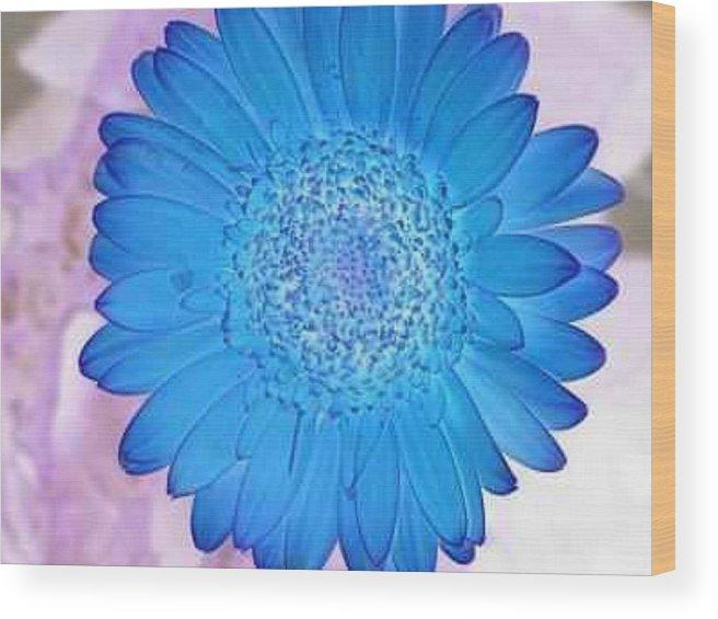 Harry Wojahn Wood Print featuring the photograph Blue Surprise by Harry Wojahn