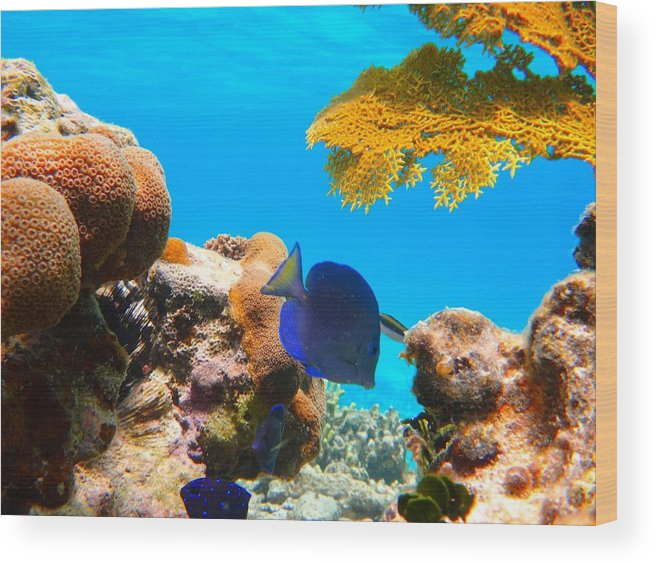 Water Wood Print featuring the photograph Blue Tang by Michael Urbain