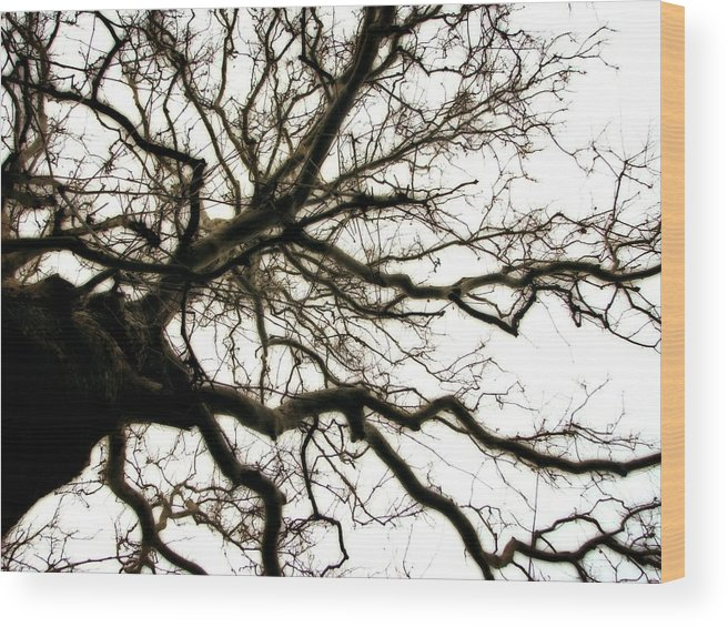 Branches Wood Print featuring the photograph Branches by Michelle Calkins