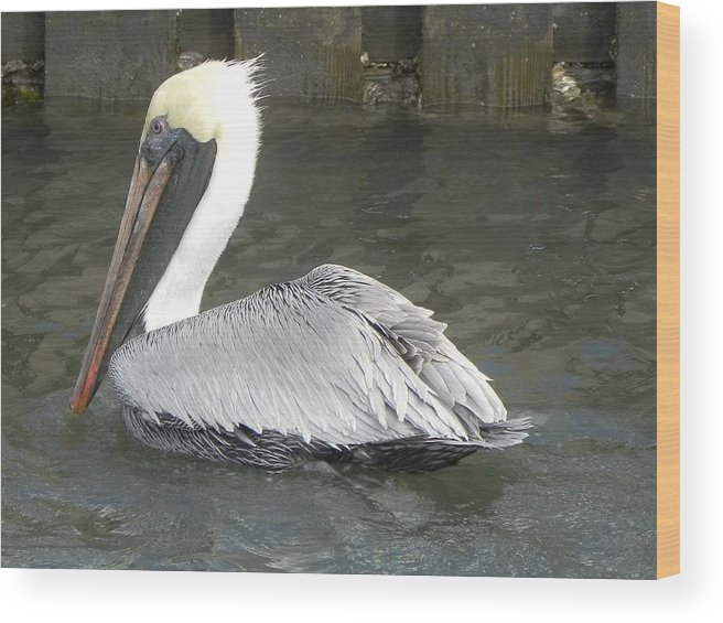 Pelican Wood Print featuring the photograph Break Time by Cynthia N Couch