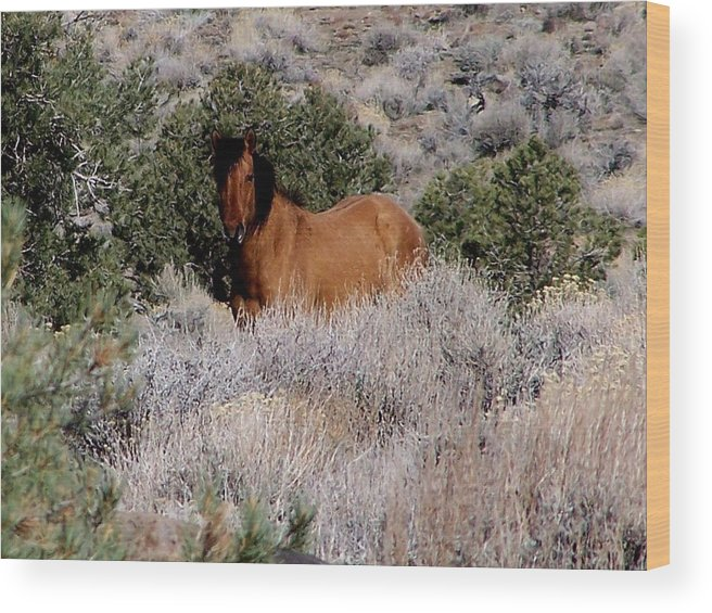 Wild Horses Wood Print featuring the photograph Buckskin by Craig Downer