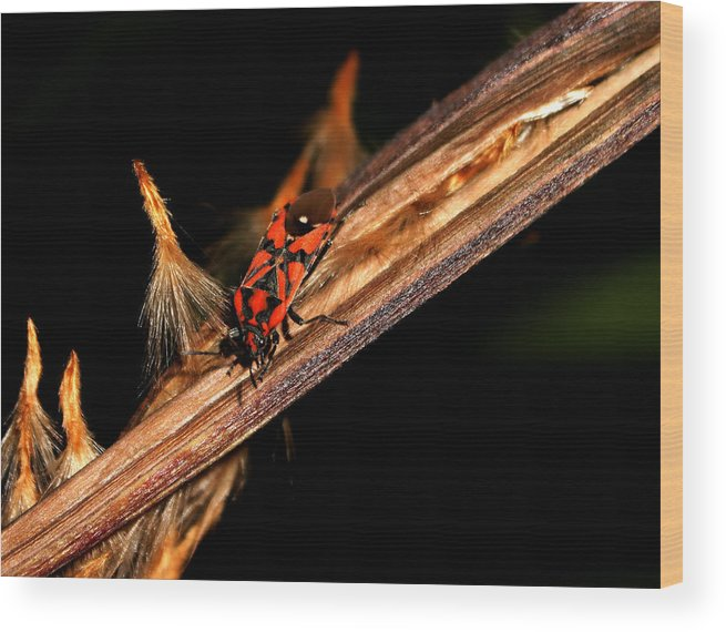Bug Wood Print featuring the photograph Bug In The Night by Ricardo Oliveira