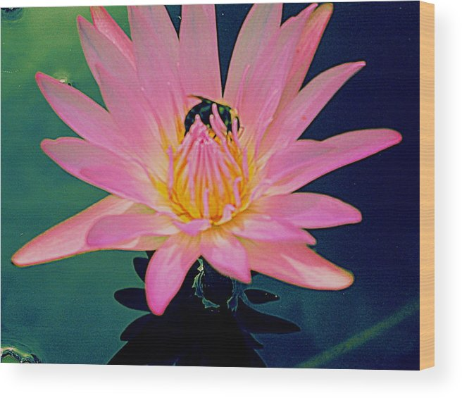Water Lily Wood Print featuring the photograph Bumblebee On Water Lily by Randall Weidner