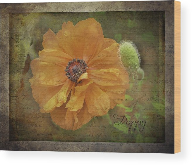 Flowers Wood Print featuring the photograph Burnished Poppy by Betty Denise
