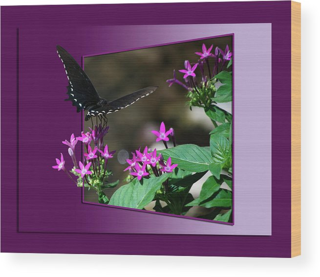 Butterfly Wood Print featuring the photograph Butterfly Black 16 By 20 by Thomas Woolworth