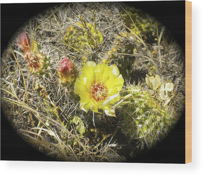 Cactus Wood Print featuring the photograph Cactus Flower by William Hallett