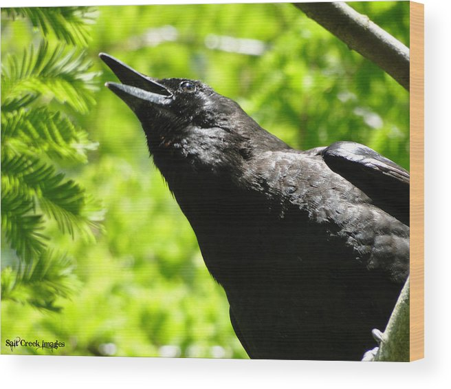 Crow Wood Print featuring the photograph Calling Crow by CJ Vermote