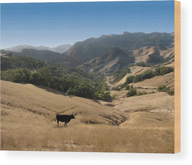 Cow In A Pasture Wood Print featuring the photograph Cambria California Country Road by Jan Cipolla