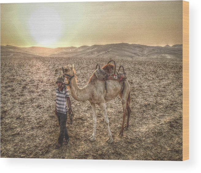 Africa Wood Print featuring the photograph Camel by Jordan Kaplan