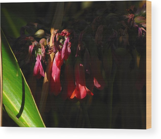 Phil Wood Print featuring the photograph Candelabra Flower by Phil Penne