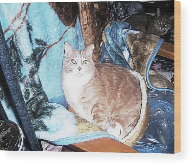 Wood Print featuring the photograph Cat Motif by Kilmeny Boates