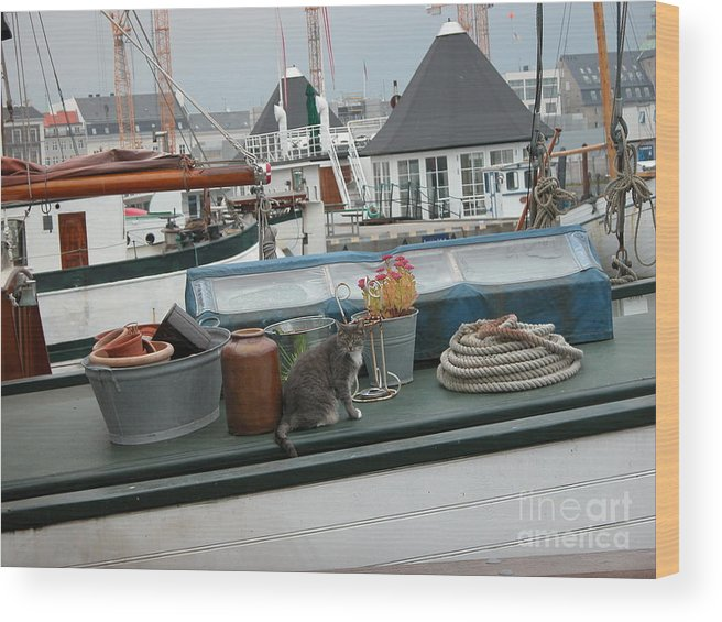 Cats Wood Print featuring the photograph Cat On Boat by Jim Goodman