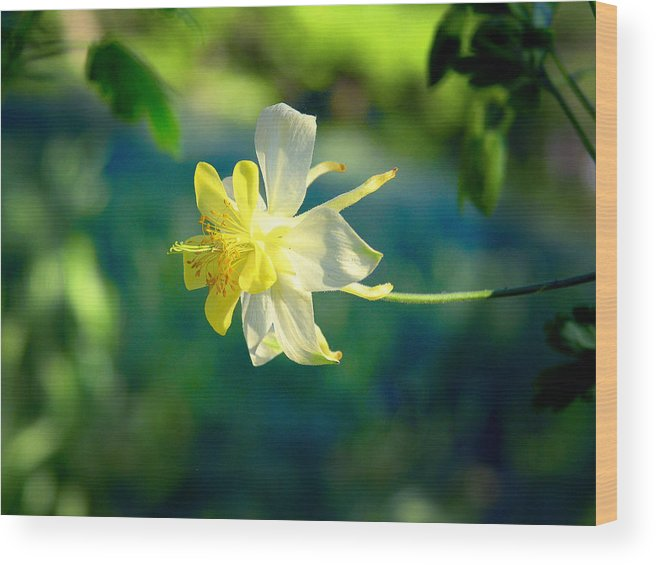 Yellow Wood Print featuring the photograph Columbine Flower by April Dunlap
