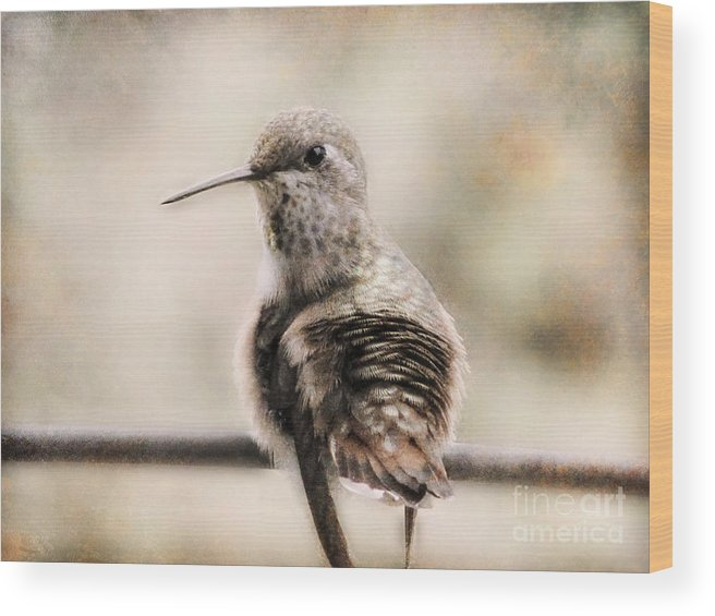 Hummingbirds Wood Print featuring the photograph Communion by Rory Sagner
