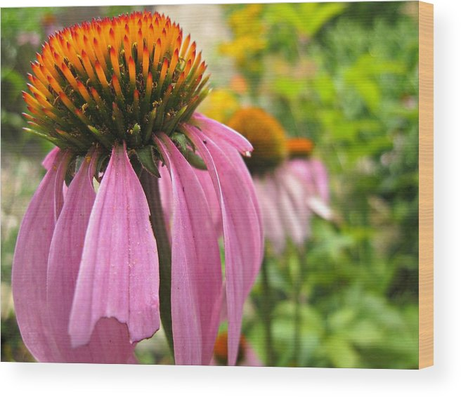 Wood Print featuring the digital art Cone Flower by Jennifer Evans
