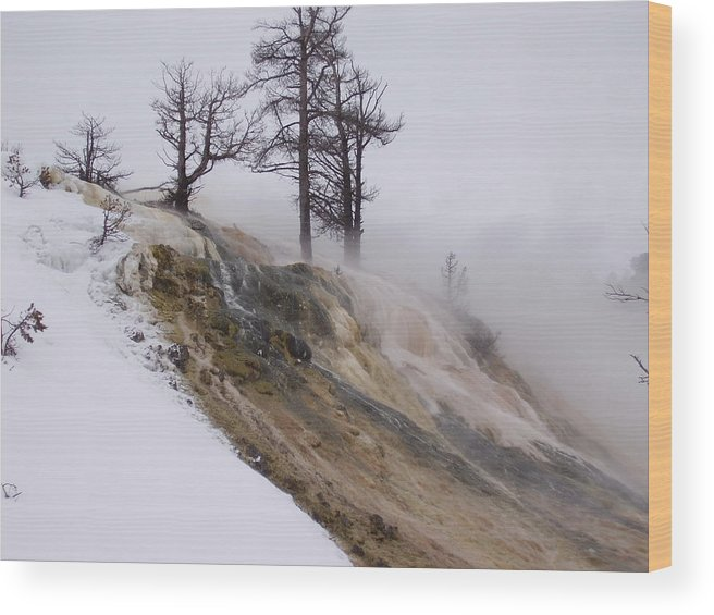 Landscape Wood Print featuring the photograph Contrast by Yvette Pichette