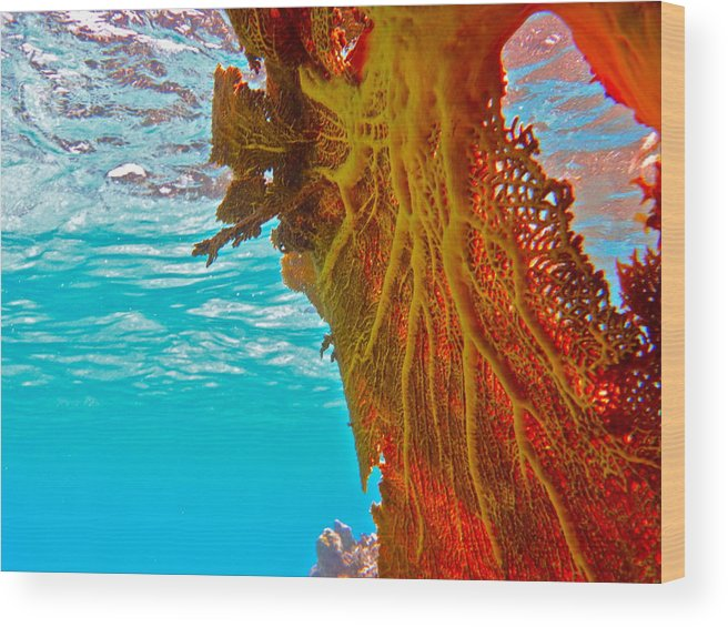 Underwater Wood Print featuring the photograph Coral Reef Fern by Michael Urbain