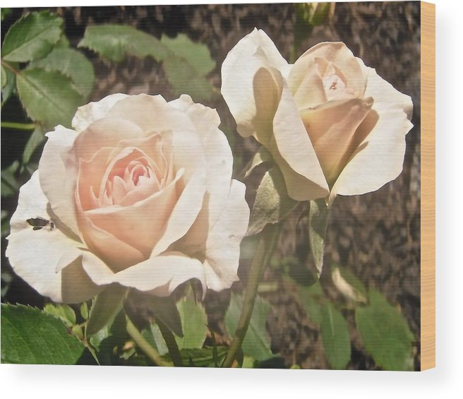 Roses Wood Print featuring the photograph Creamy Roses by Stephanie Moore