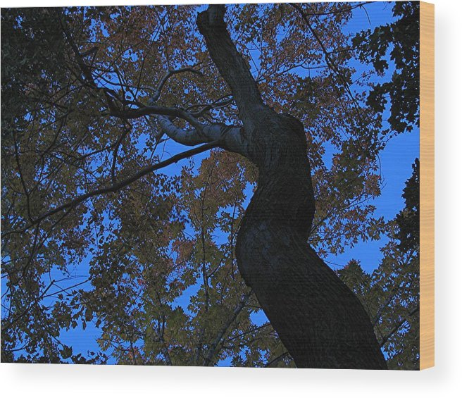 Tree Wood Print featuring the photograph Dancing by Juergen Roth