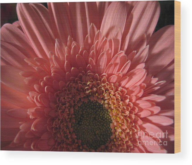 Flower Wood Print featuring the photograph Dark Radiance by Ann Horn