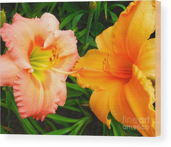 Day Lilies As Happy Friends Wood Print featuring the photograph Day Lilies As Happy Friends by Paddy Shaffer