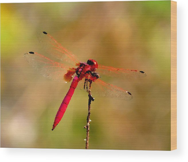 Dragonfly Wood Print featuring the painting Dragonfly Paintings by Nicole Gardner