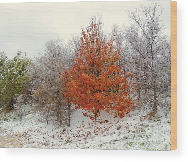 Fall Wood Print featuring the photograph Fall And Winter by Robert ONeil