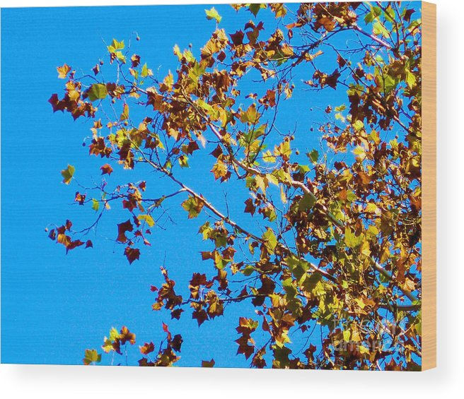 Tree Wood Print featuring the photograph Fall-ing Leaves by Tahlula Arts