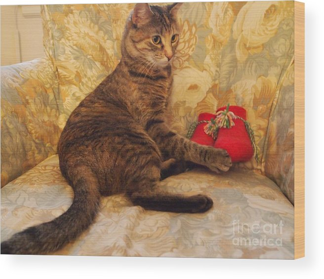 Photography. Cat Photography Wood Print featuring the photograph Feather With Christmas Booties by Nancy Kane Chapman