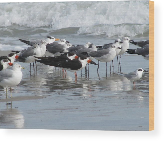 Animals Wood Print featuring the photograph Feathered Friends by Ellen Meakin