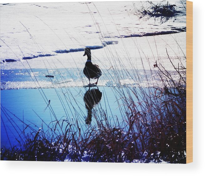 Duck Wood Print featuring the photograph Feeling Pretty by Zinvolle Art