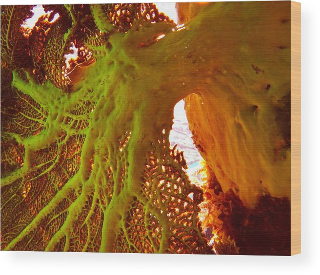 Underwater Wood Print featuring the photograph Fern by Michael Urbain