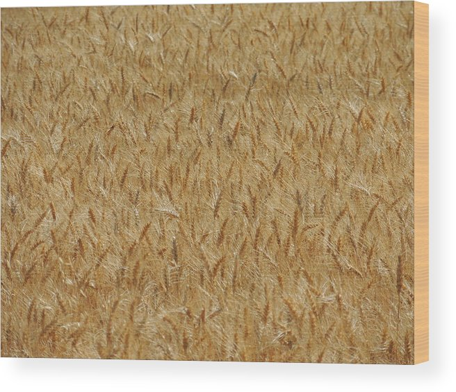 Nature Wood Print featuring the photograph Fields Of Grain by Lucy Howard