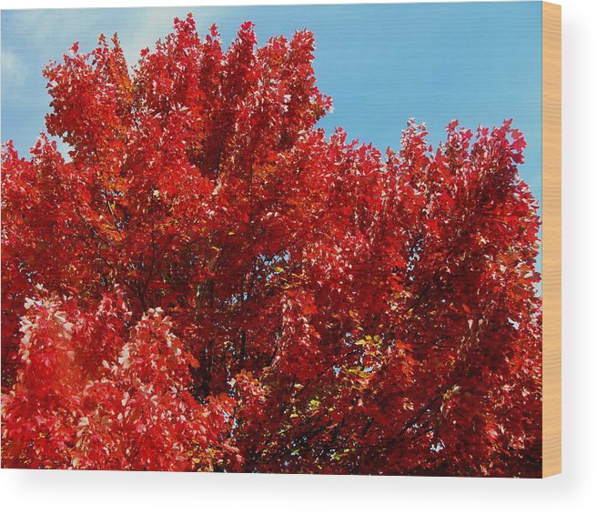 Autumn Wood Print featuring the photograph Fiery Leaves by Laura Corebello
