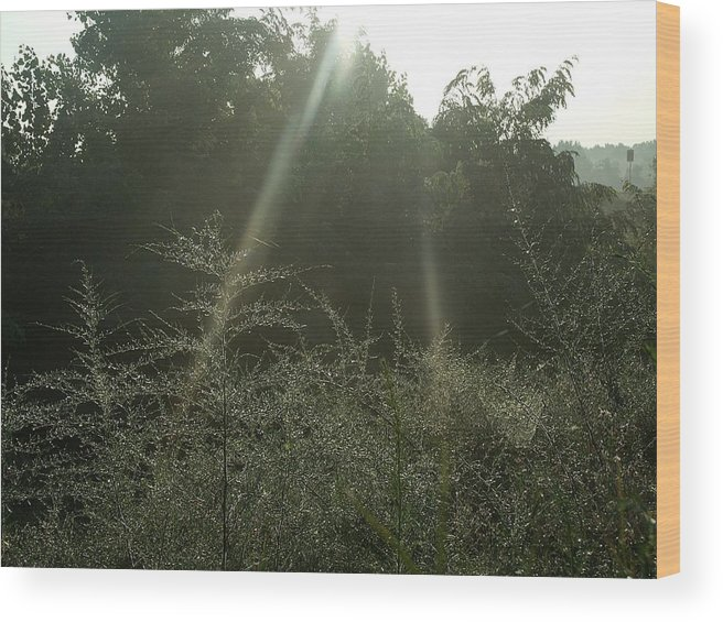 Dew Wood Print featuring the photograph Flare by David Addams