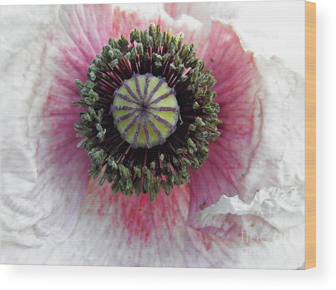 Poppy Wood Print featuring the photograph Floral Geometry by Sarah Loft