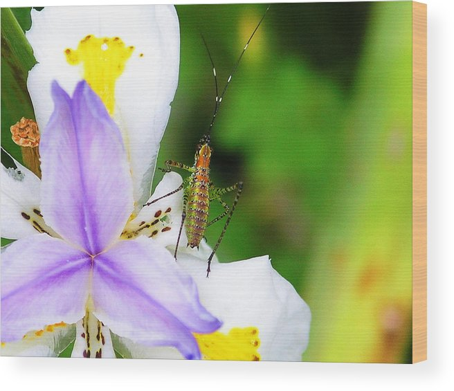 Flower Wood Print featuring the photograph Flower Bug - I by April Dunlap