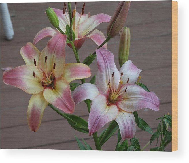 Wood Print featuring the photograph Flowers And Buds by Glenda Fink