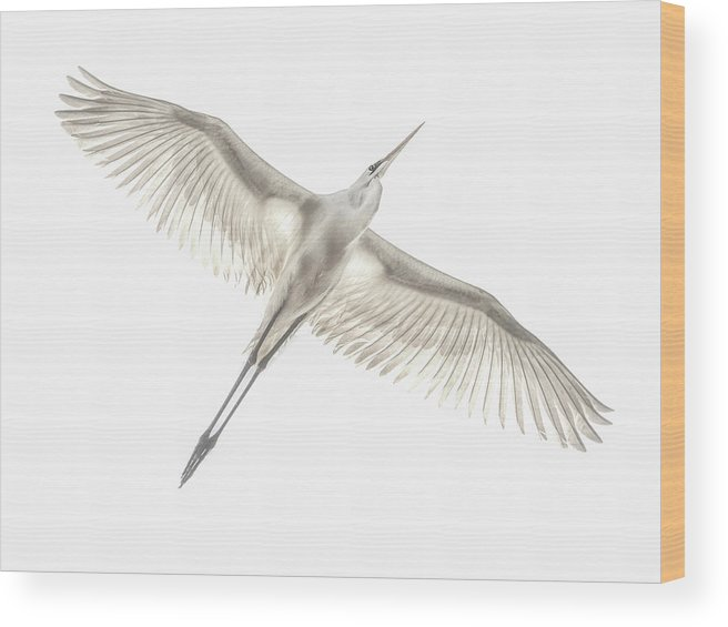 Avian Wood Print featuring the photograph Fly by Keren Or