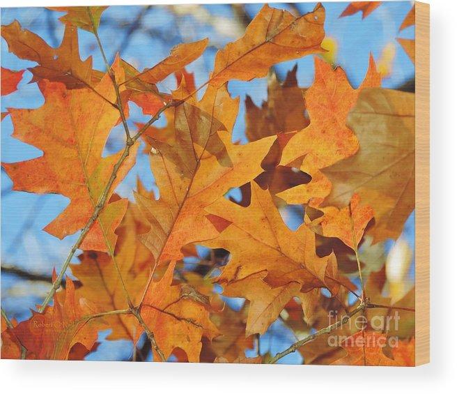 Orange Leaves Wood Print featuring the photograph Foglie Di Arancio by Robert ONeil