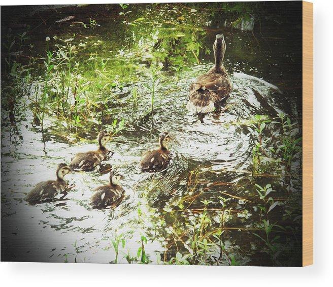 Ducks Wood Print featuring the photograph Follow Me by Barbara McDevitt