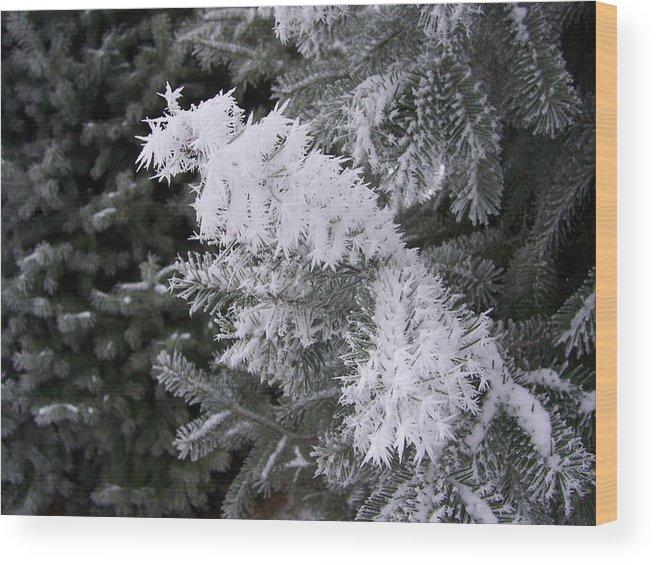 Nature Wood Print featuring the photograph Frozen In Time by Brenda Solis