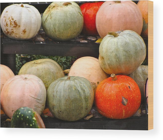 Fall Harvest Wood Print featuring the photograph Glistening Gourds by Ira Shander