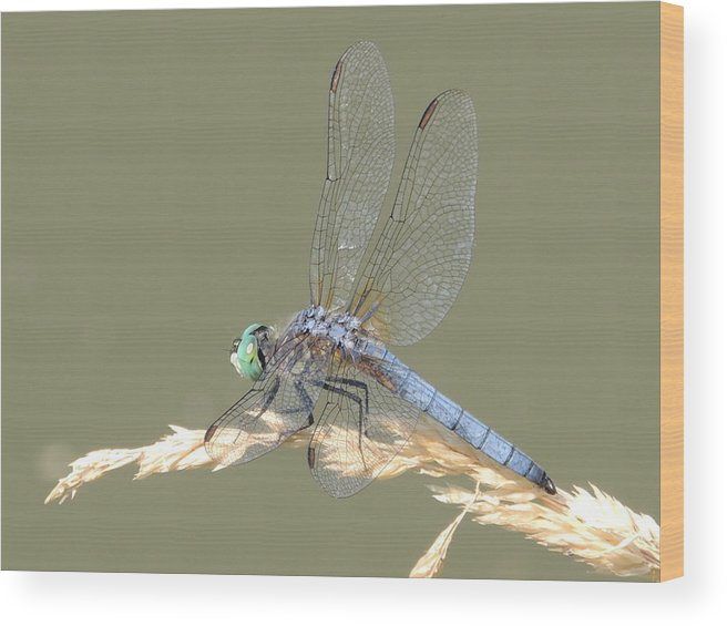 Dragonfly Wood Print featuring the photograph Green Dragonfly by Lucy Howard