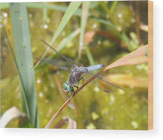 Dragonfly Wood Print featuring the photograph Green Eyes by Lucy Howard