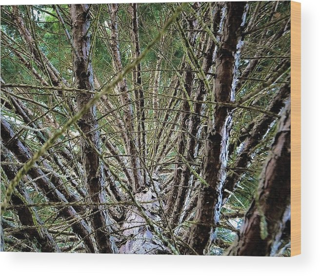Pine Wood Print featuring the photograph Growing Pine by Marc Philippe Joly