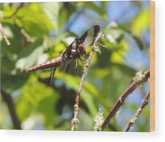 Dragonfly Wood Print featuring the photograph Hanging Out by Lucy Howard