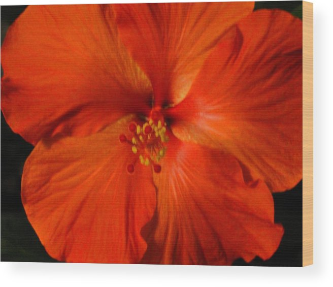 Flower Wood Print featuring the photograph Hibiscus by Christine Olson