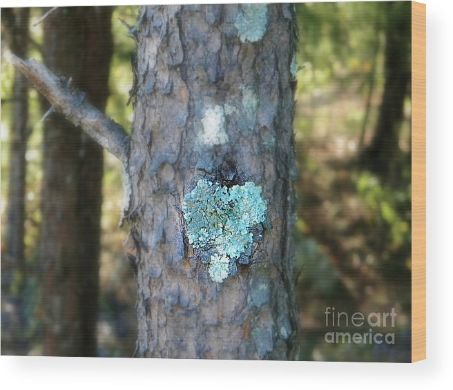 Tree Wood Print featuring the photograph I Heart You by Lorraine Heath